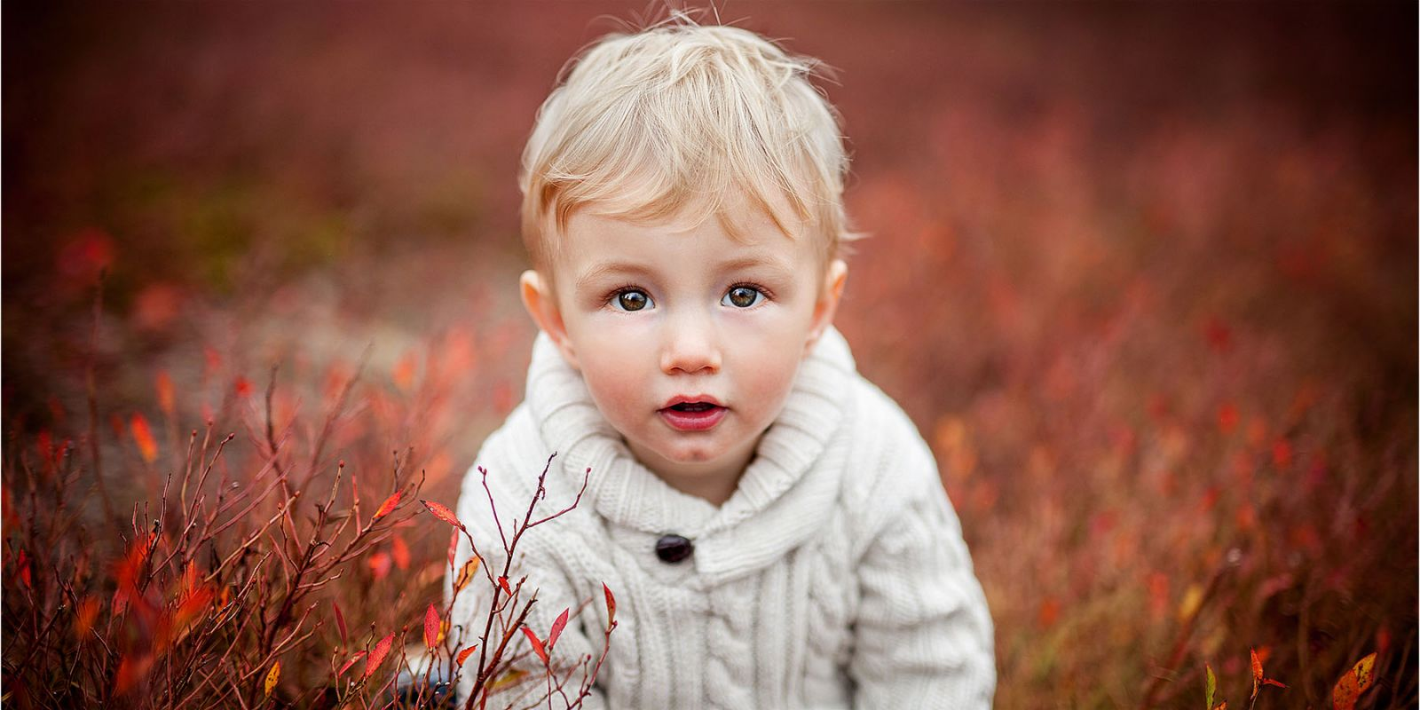 Young boy with blonde hair and brown eyes in a red blueberry field.